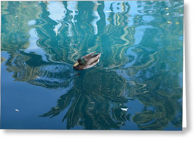 Duck Swimming In The Blue Lagoon Greeting Card by Aimee L Maher Photography and Art Visit ALMGallerydotcom