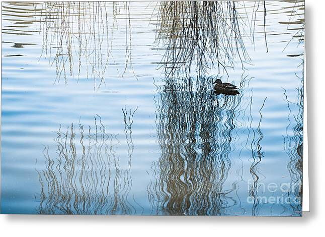 Duck Under Willow Droop Twigs Greeting Card by Arletta Cwalina