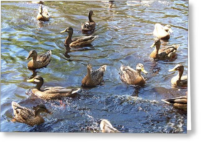 Duck World Greeting Card by Rosanne Bartlett