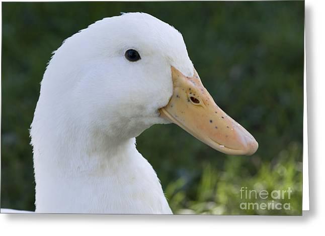Duckie Greeting Card by Tara Lynn