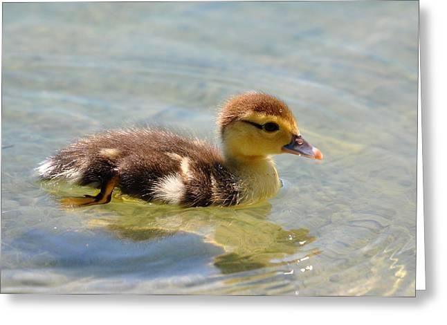 Duckling 7 Greeting Card by Teresa Blanton