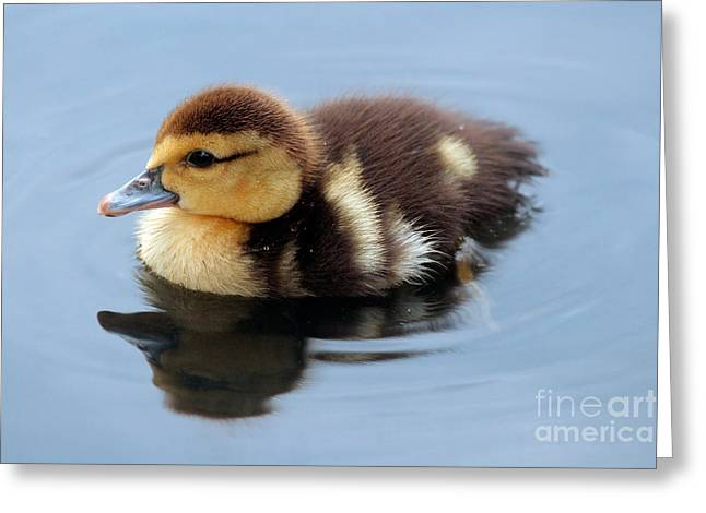 Duckling Greeting Card by Jeannie Burleson