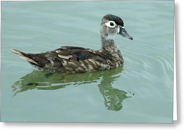 Duckling Greeting Card by Teresa Blanton