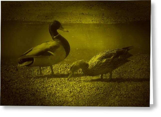 Ducks #3 Greeting Card