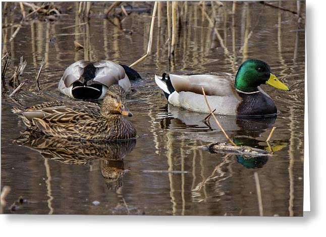Greeting Card featuring the photograph Ducks At Bombay Hook by Robert Pilkington