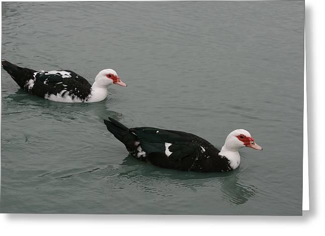 Ducks Cruise Greeting Card by David Wahome