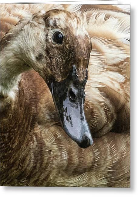Ducks Head Greeting Card