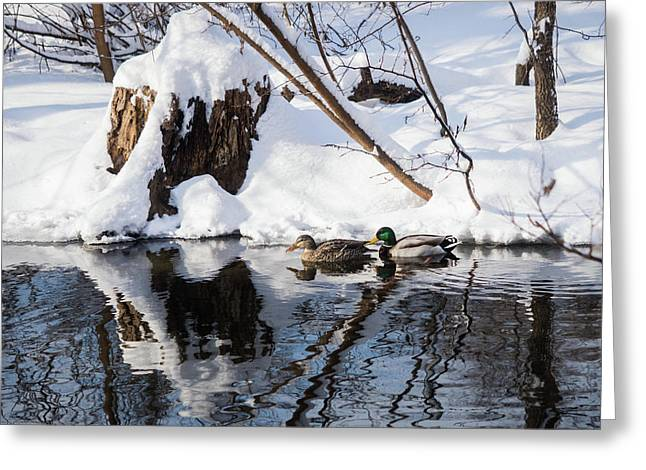 Ducks In Snow Greeting Card