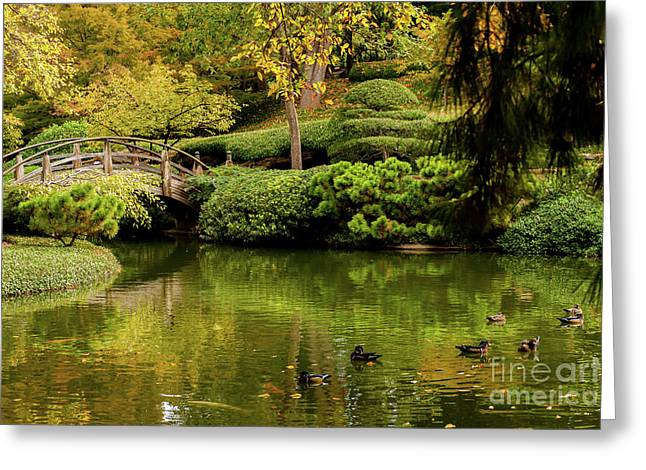 Greeting Card featuring the photograph Ducks In Summertime by Iris Greenwell