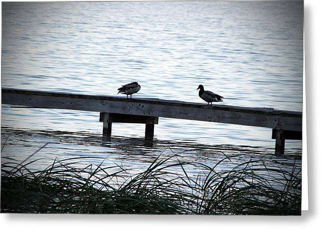 Ducks On A Dock Greeting Card