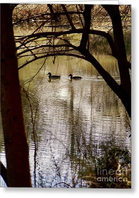 Ducks On A Lake Greeting Card by Rachel Morrison