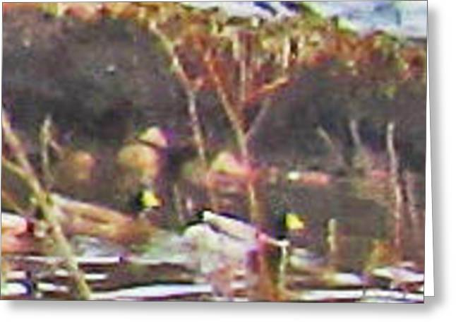 Greeting Card featuring the photograph Ducks On Pond by Tammy Sutherland
