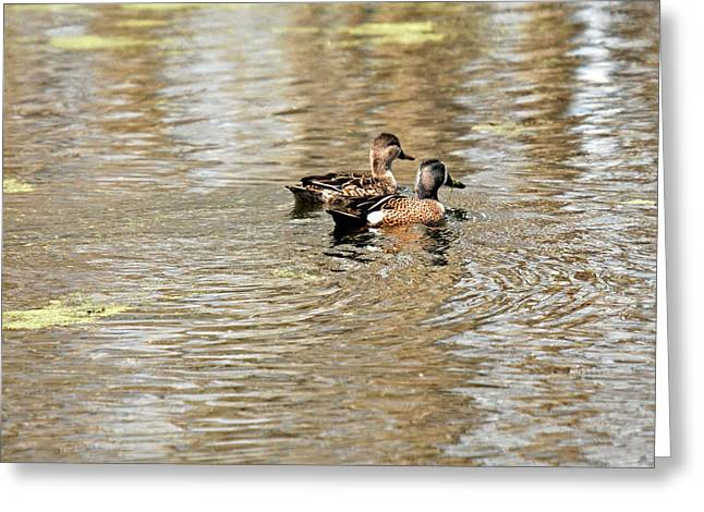 Ducks Together Greeting Card by Teresa Blanton