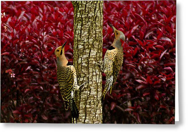 Dueling Woodpeckers Greeting Card