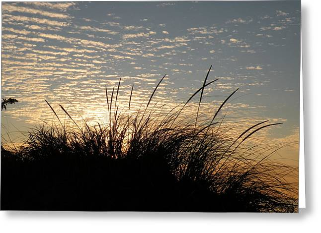 Dune Grass Greeting Card by Donald Cameron