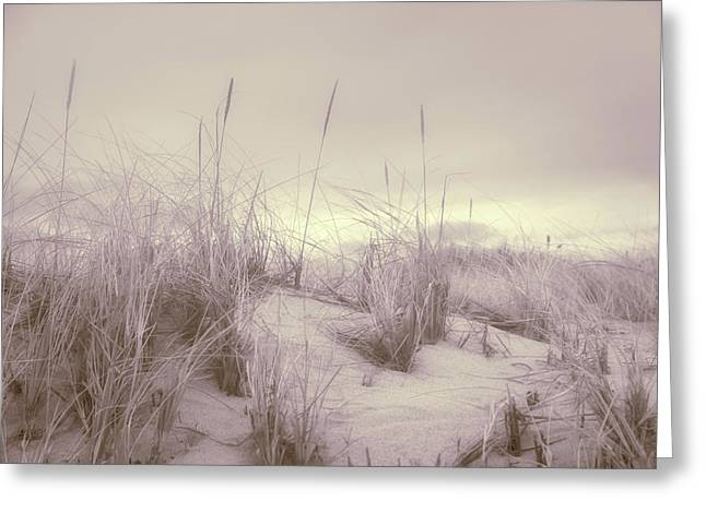 Dune Grass Greeting Card by Kate Hannon