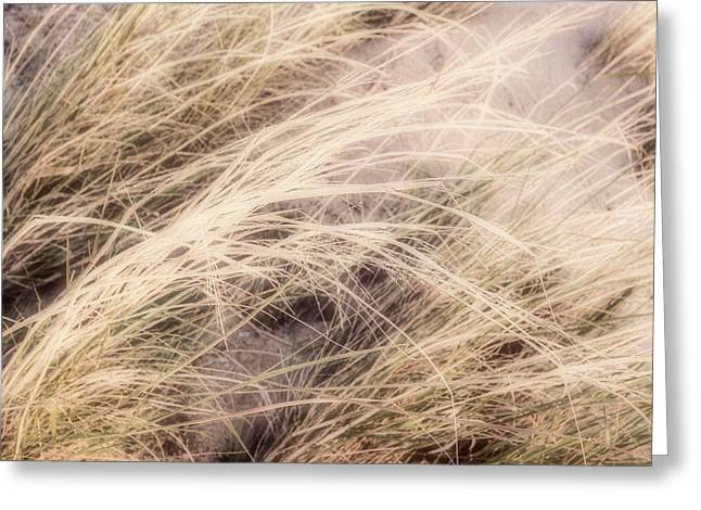 Greeting Card featuring the photograph Dune Grass Nature Photography by Ann Powell