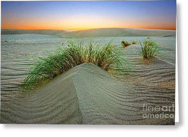 Dune Grass Of Bruneau Idaho Greeting Card
