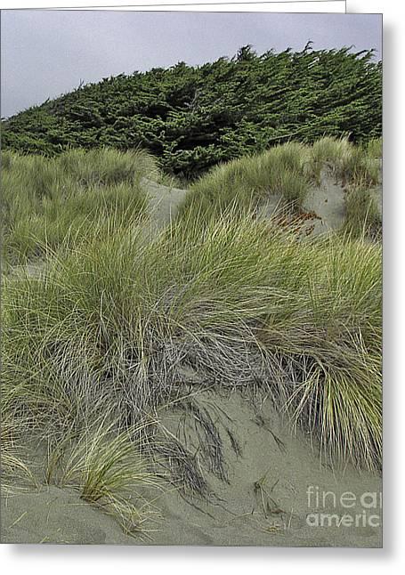 Bodega Dunes #3 Greeting Card