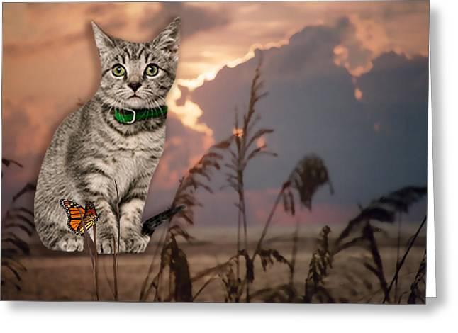 Dune Kitty Greeting Card