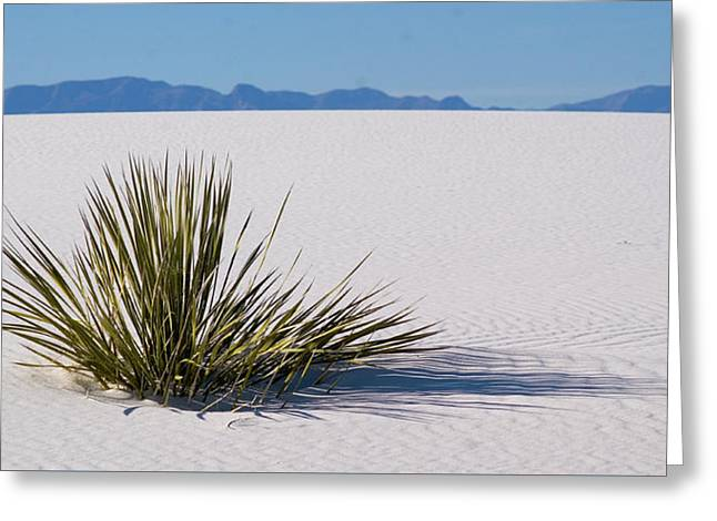 Dune Plant Greeting Card by Marie Leslie
