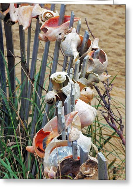 Dune Shell Fence Greeting Card