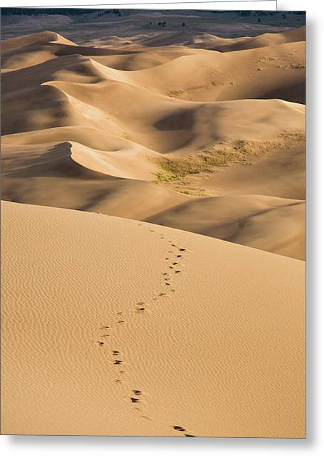 Dunefield Footprints Greeting Card by Adam Pender