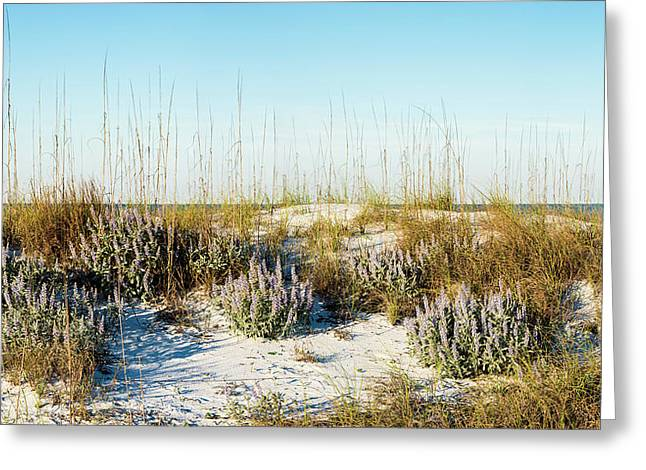 Dunetop Blue Lupine - Wide Greeting Card
