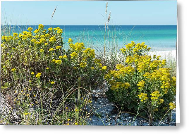 Dunetop Wildflowers By The Beach Greeting Card