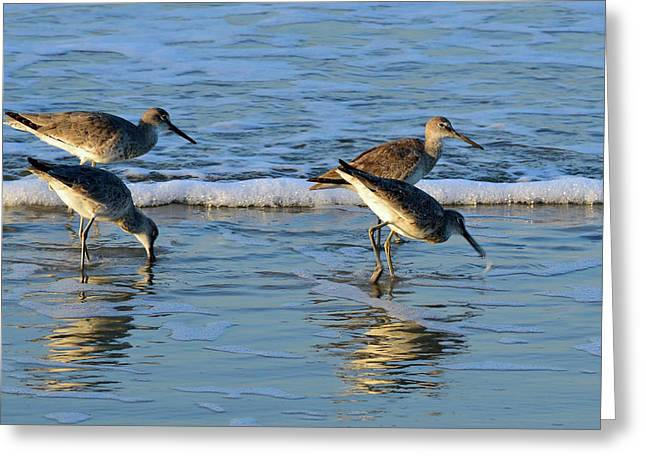 Dunking Willets Greeting Card by Bruce Gourley