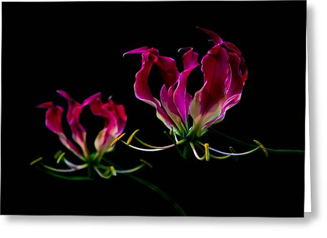 Duo Lily Greeting Card by David Paul Murray