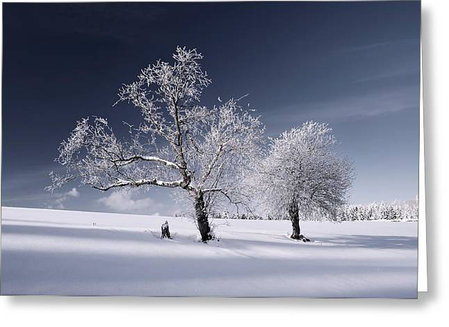 Duo White Greeting Card by Philippe Sainte-Laudy