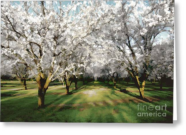 Durham Almond Blossoms Greeting Card