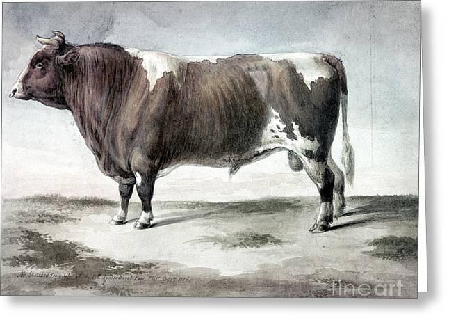 Durham Bull, 1856 Greeting Card by Granger