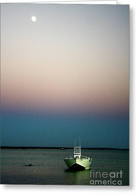 Dusk And Dolphin Greeting Card by Caroline Walker