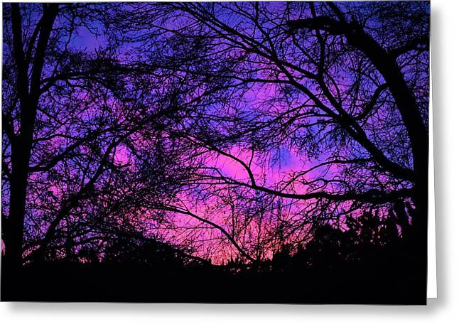 Dusk And Nature Intertwine Greeting Card
