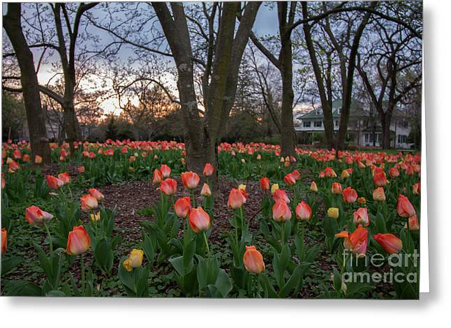 Greeting Card featuring the photograph Dusk At Sherwood Gardens by Chris Scroggins
