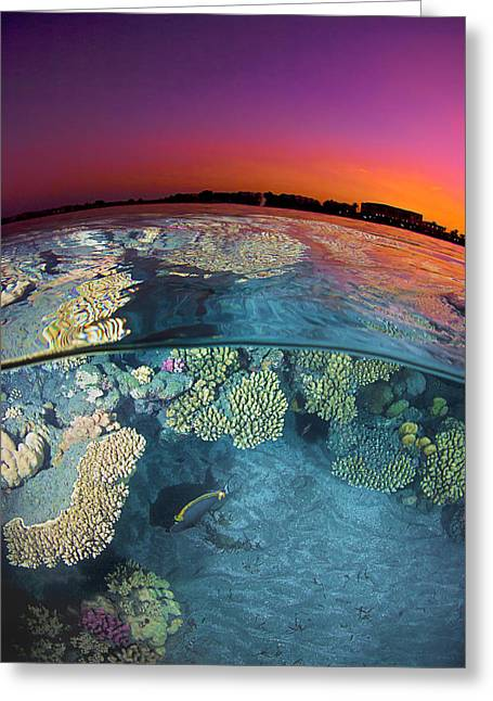 Dusk At The Red Sea Reef Greeting Card by Henry Jager