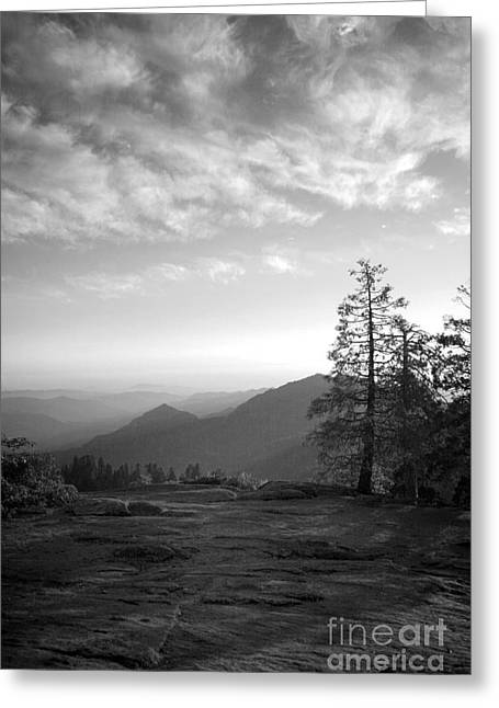 Dusk In Sequoia Greeting Card