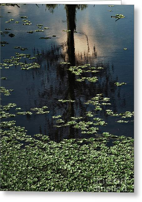 Dusk In The Swamp Greeting Card