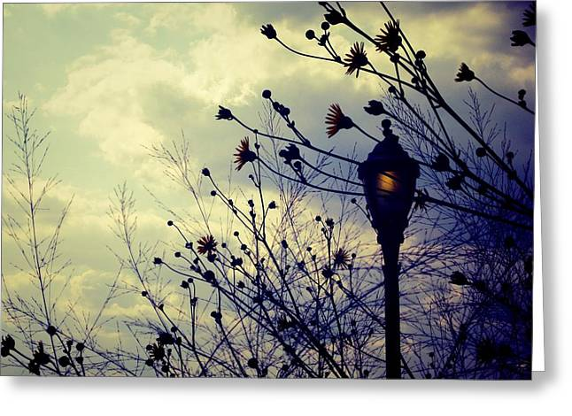 Dusk Greeting Card by Jhoy E Meade