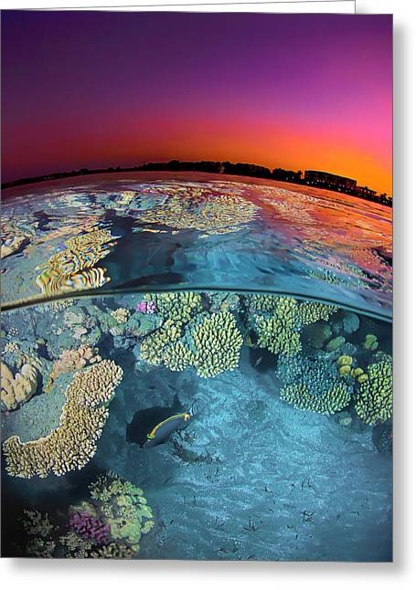 Dusk Over The Red Sea Reef Greeting Card