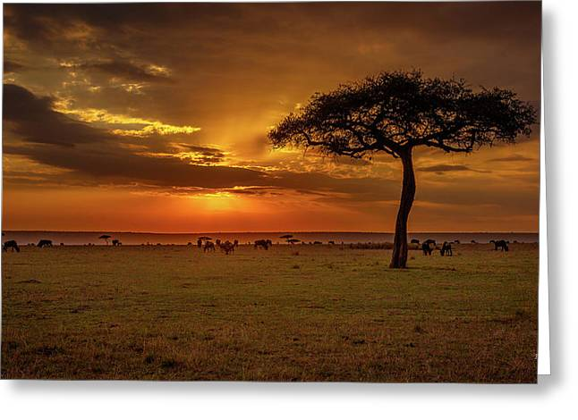 Dusk Over  The Serengeti Greeting Card