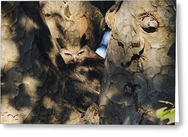 Dusky Horned Owl  Greeting Card by Manjot Singh Sachdeva