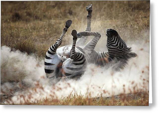 Dust Bath Greeting Card by Michel Guyot