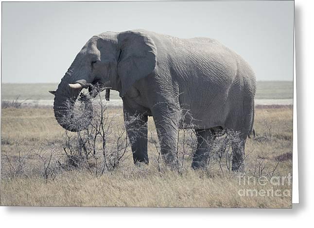 Dusty Elephant, Namibia Greeting Card
