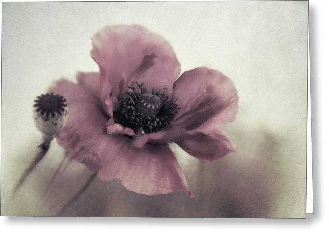 Dusty Pink Poppy Greeting Card by Priska Wettstein