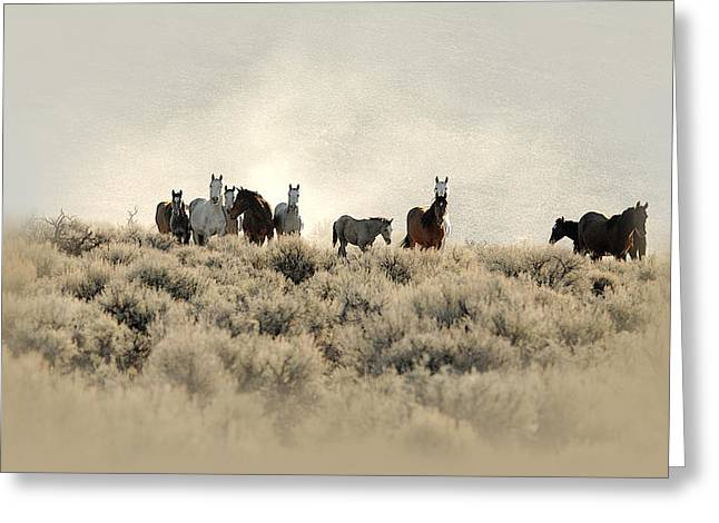 The Horse Greeting Cards - Dusty Trails Greeting Card by Marilyn Gregory