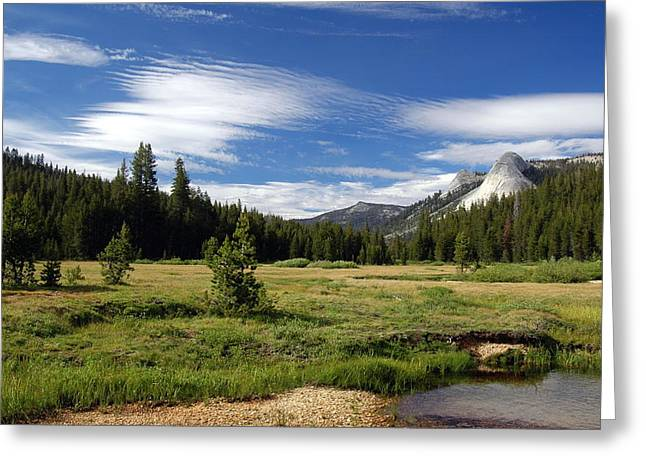 Dusy Meadow Greeting Card