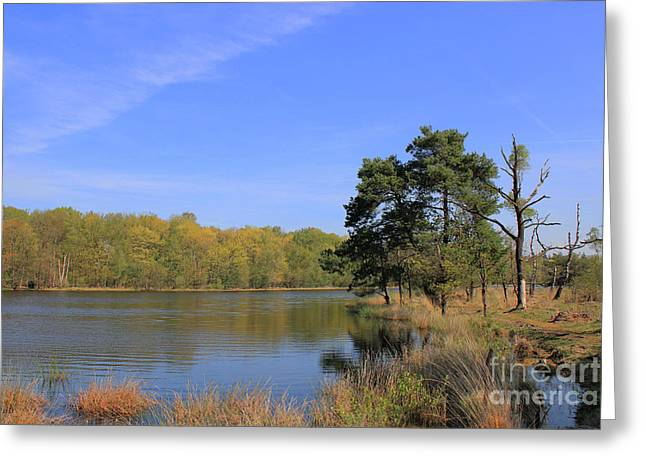 Dutch Countryside With Lakes, Trees, Meadows Greeting Card